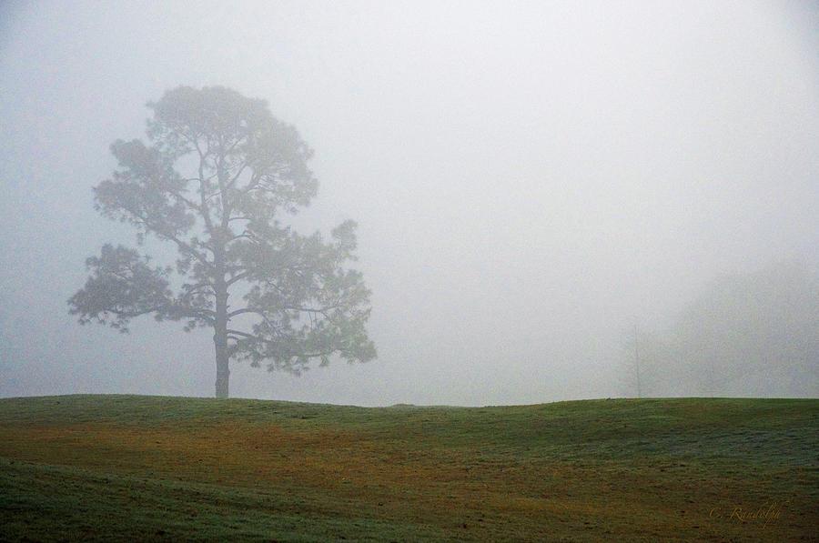 Lone Tree Photograph - Somewhere by Cheri Randolph