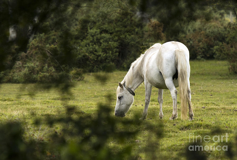 Pony Photograph - Somewhere In The Forest by Angel  Tarantella