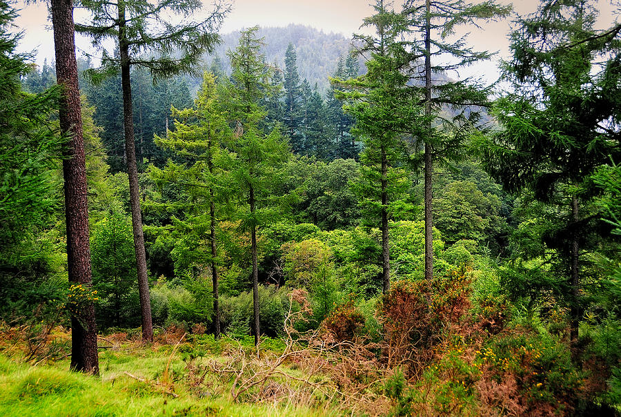 Ireland Photograph - Somewhere In The Forest Over Upper Lake. Glendalough. Ireland by Jenny Rainbow