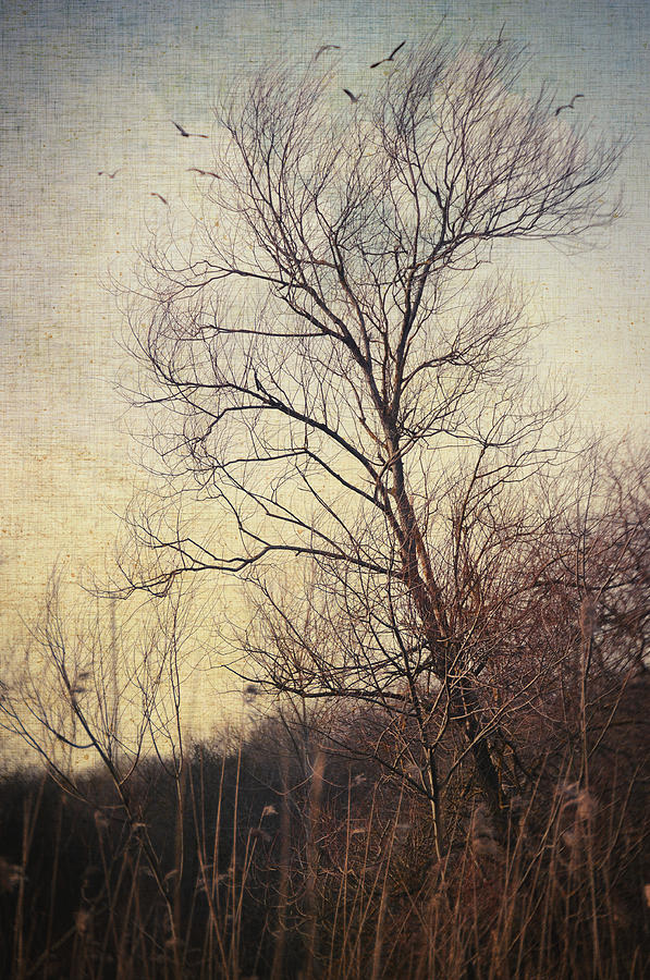 Tree Photograph - Somewhere In Time by Zapista Zapista