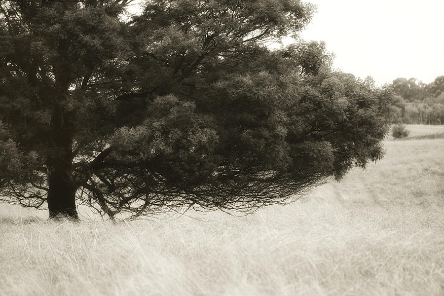 Tree Photograph - Somewhere To Dream by Amy Weiss