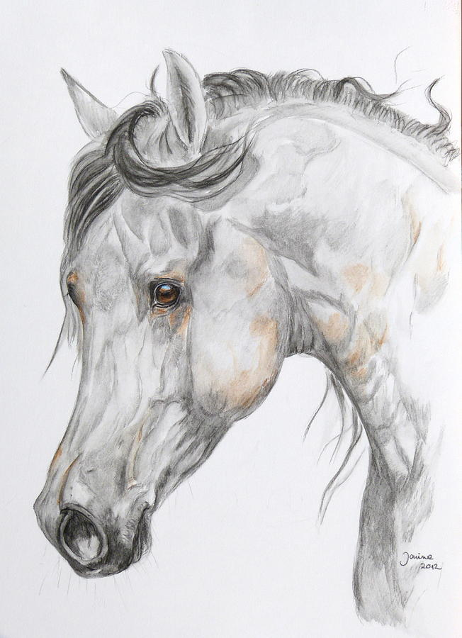 Arabian Horse Painting - Son Of The Wind by Janina  Suuronen