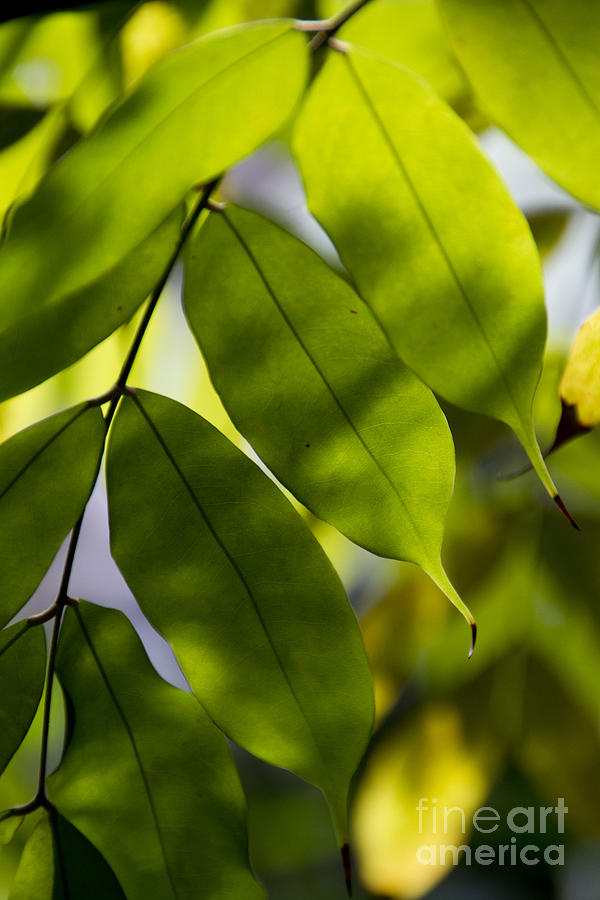Leaf Photograph - Song of leaves-4 by Tad Kanazaki