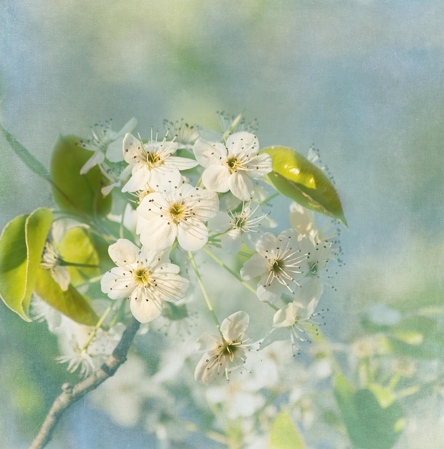 Flower Photograph - Song Of Spring by Kim Hojnacki