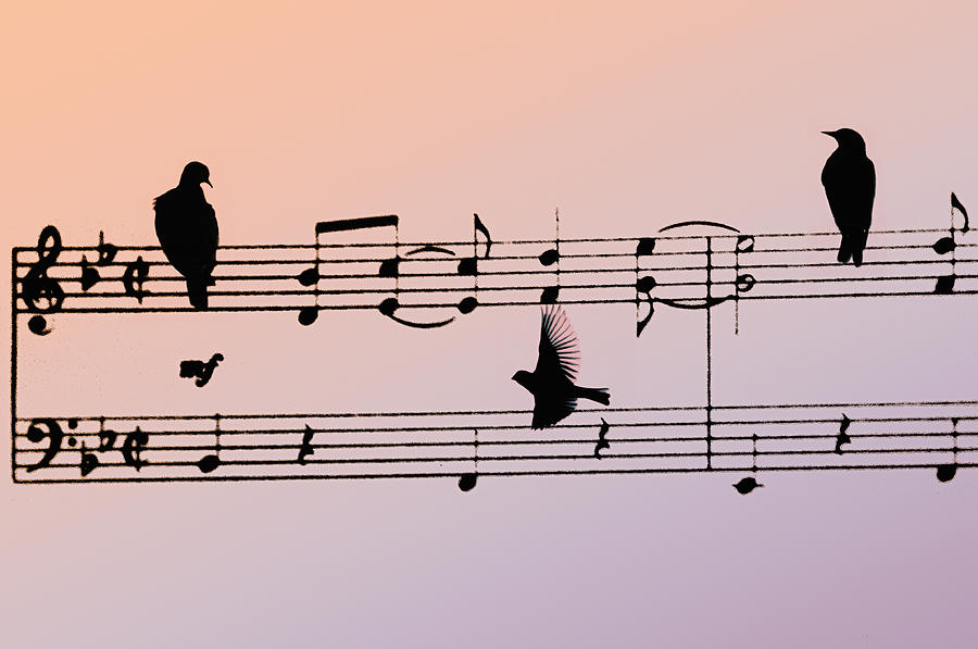Music Photograph - Songbirds by Bill Cannon