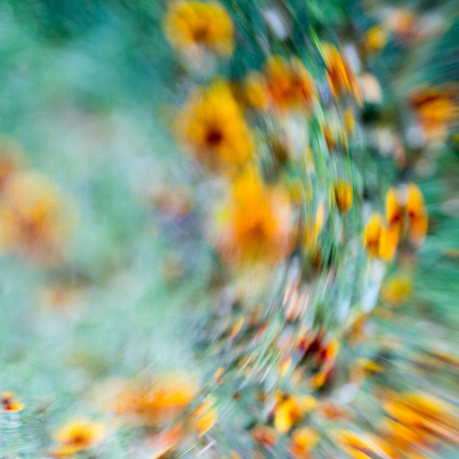 Floral Abstract Photograph - Sonic by Darryl Dalton