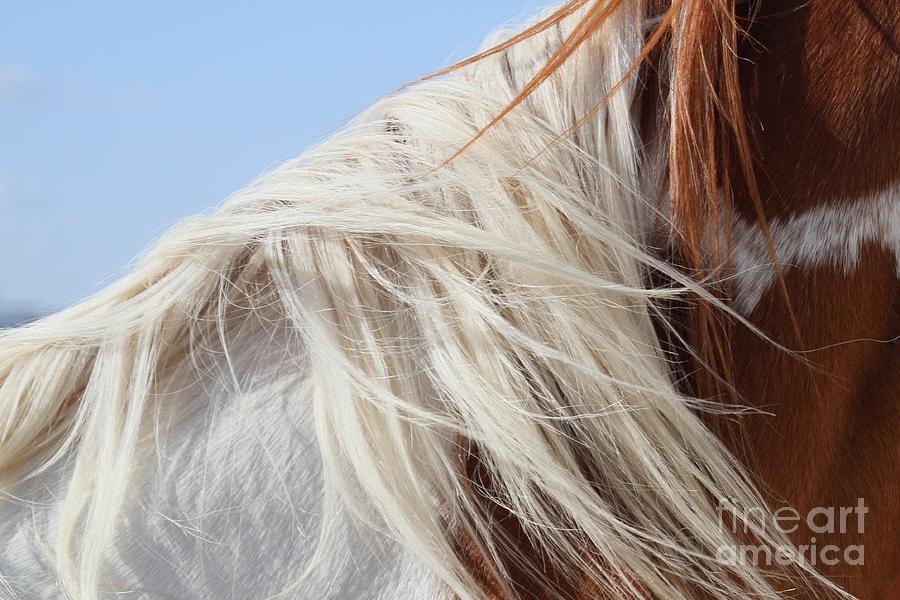 Horse Photograph - Sonnys Mane by Ashley M Conger