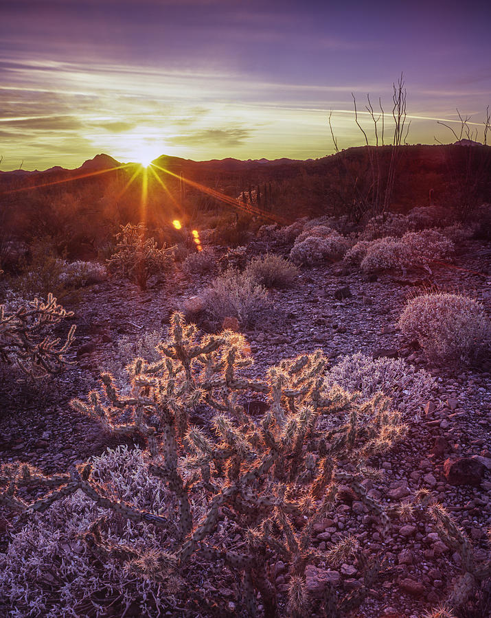 Sonoran Delight Photograph by Tony Santo