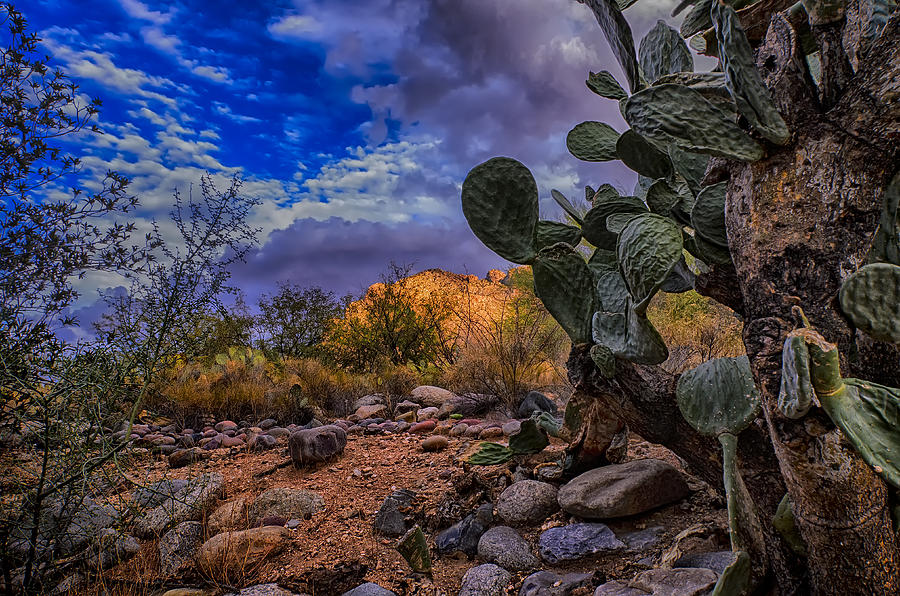 Sonoran Desert 54 Photograph