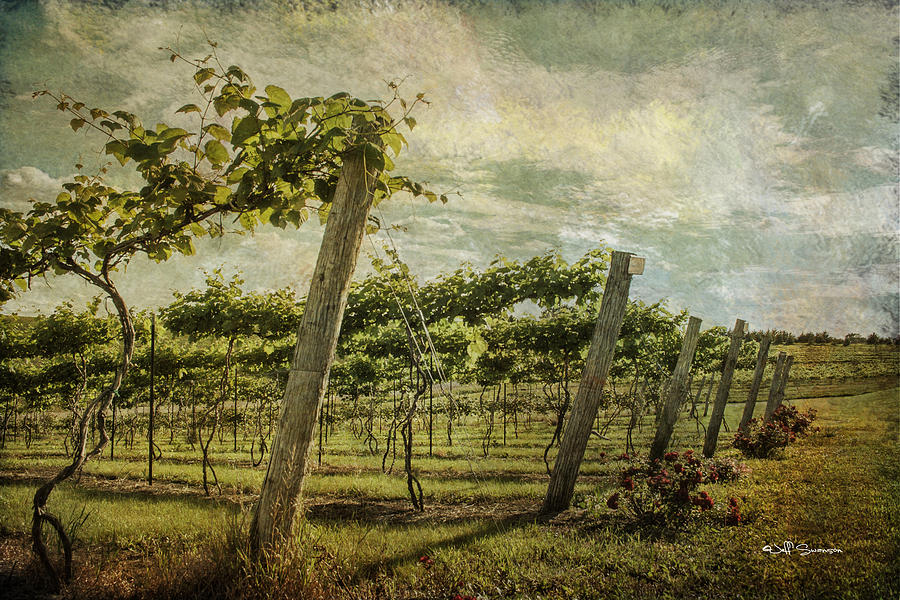 Wine Photograph - Soon There Will Be Wine by Jeff Swanson