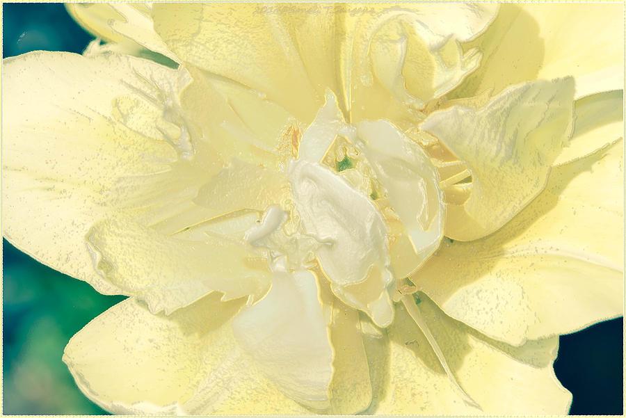 Lemon Yellow Photograph - Soothing Daffodils by Sonali Gangane