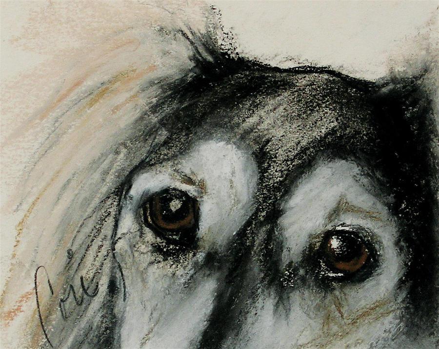 Saluki Drawing - Sophias Eyes by Cori Solomon