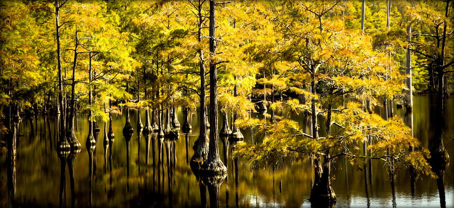 Cypress Trees Photograph - Sounds Of Time by Karen Wiles