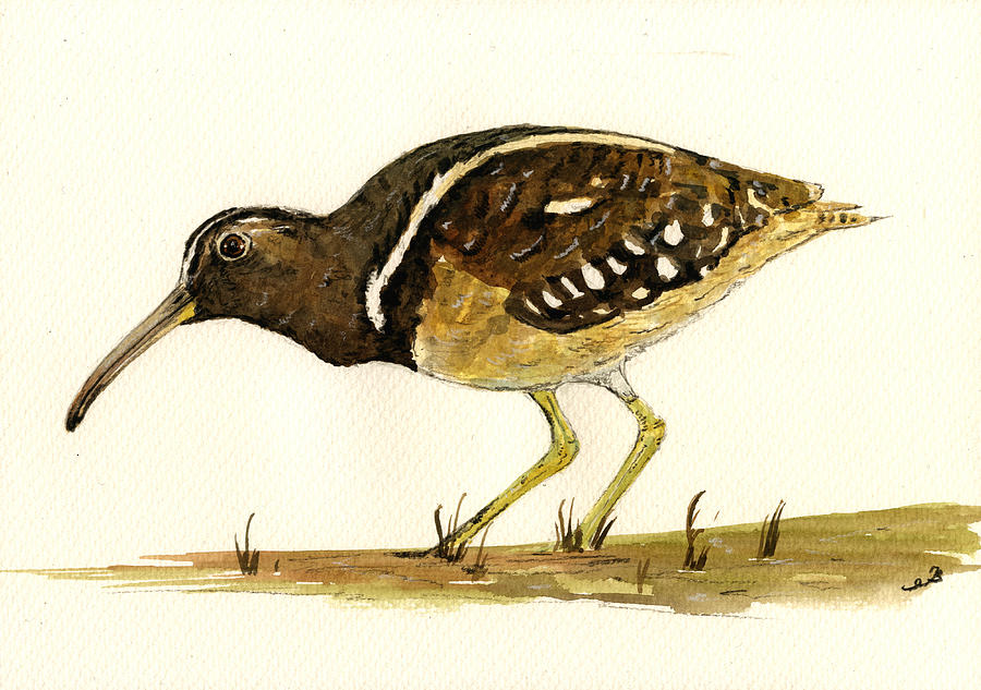 South America Painting - South American Painted Snipe by Juan  Bosco