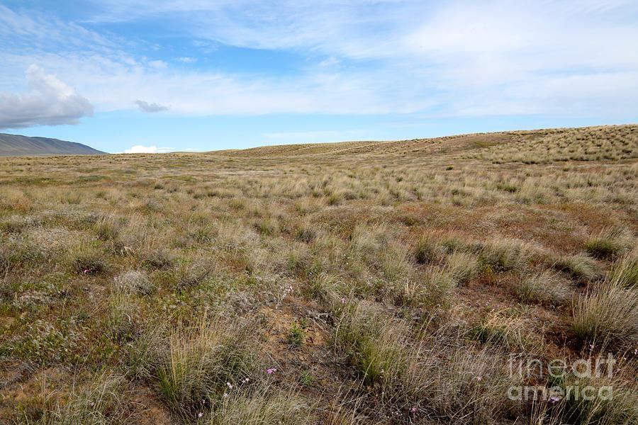 Grassland Photograph - South-central Washington Grassland by Carol Groenen