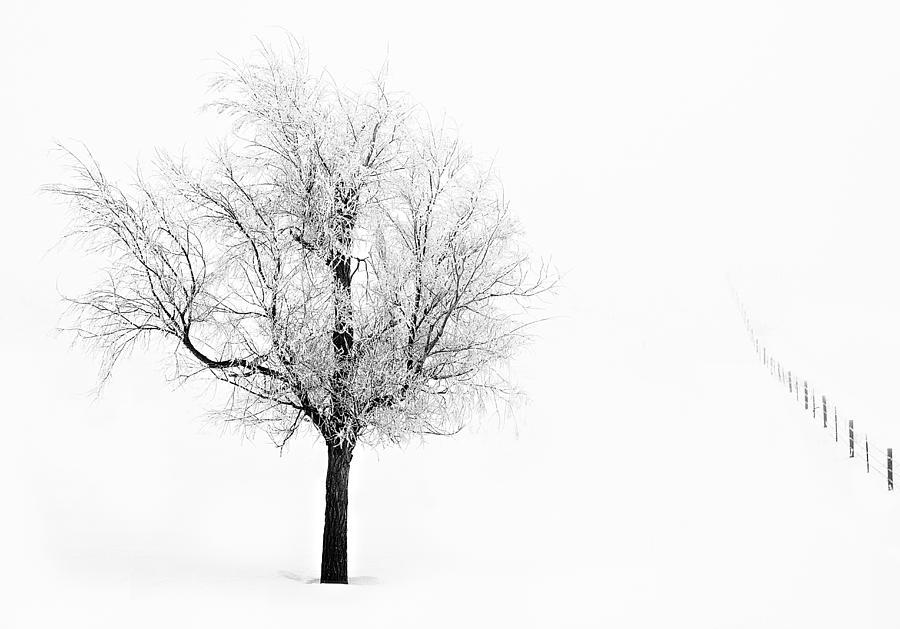 Winter Photograph - South Dakota Winter by David Wynia
