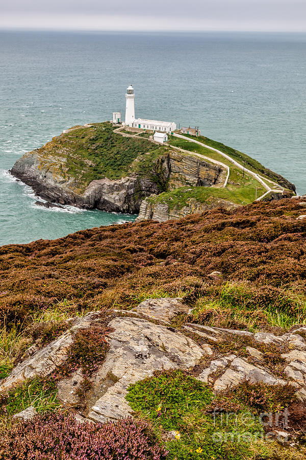 Lighthouse Photograph - South Stack Lighthouse by Adrian Evans