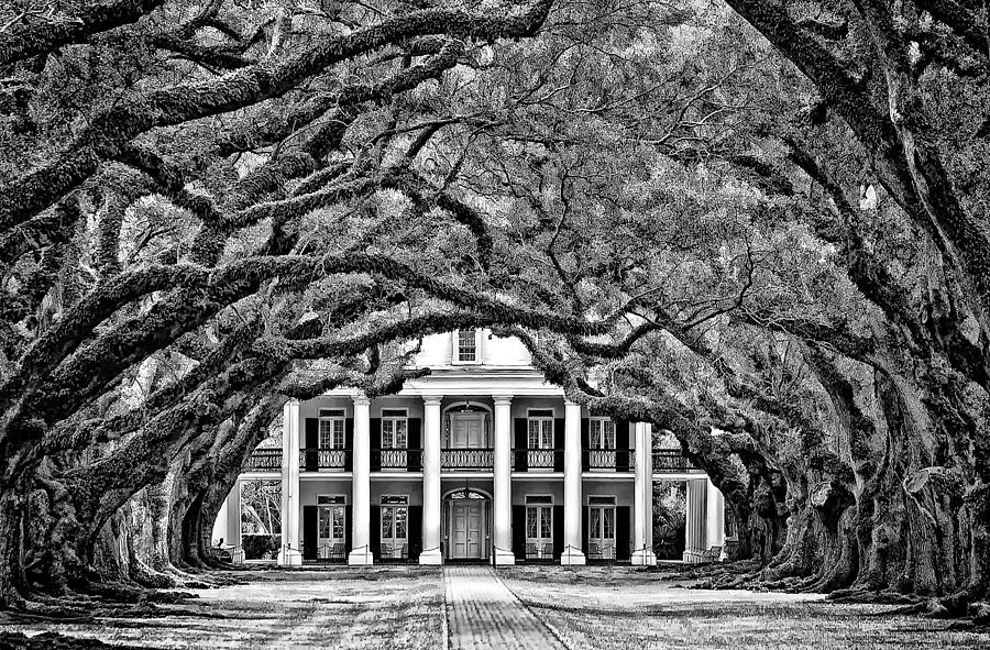 Oak Alley Plantation Photograph - Southern Class Monochrome by Steve Harrington