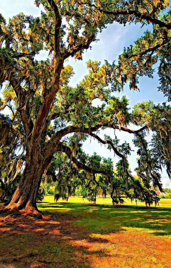 Evergreen Plantation Photograph - Southern Comfort Painted by Steve Harrington