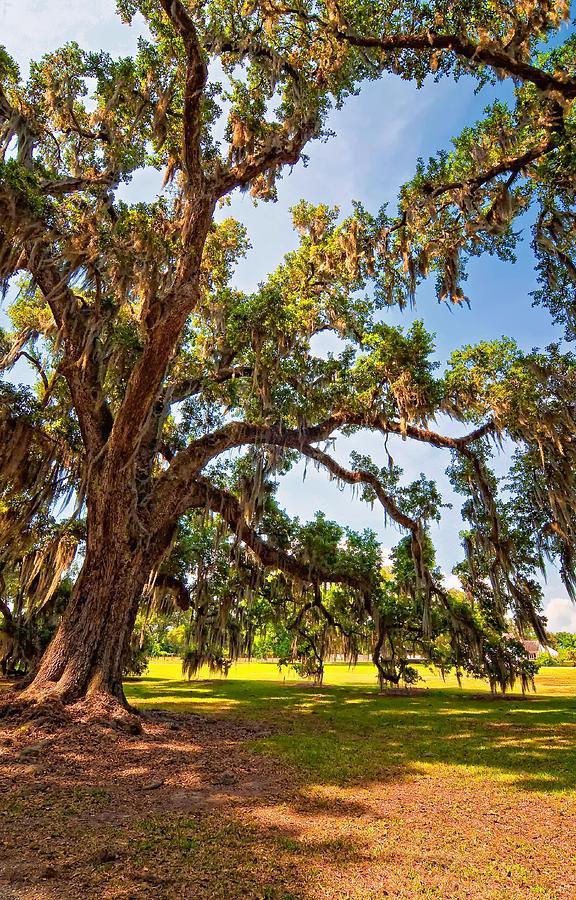 Evergreen Plantation Photograph - Southern Comfort by Steve Harrington