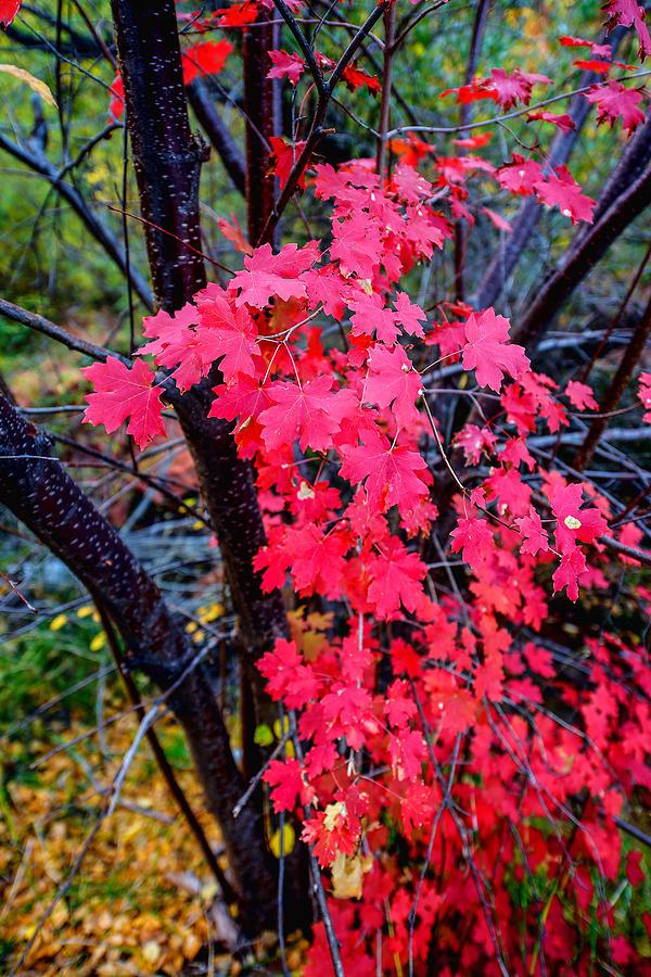 Fall Photograph - Southern Fall by Chad Dutson