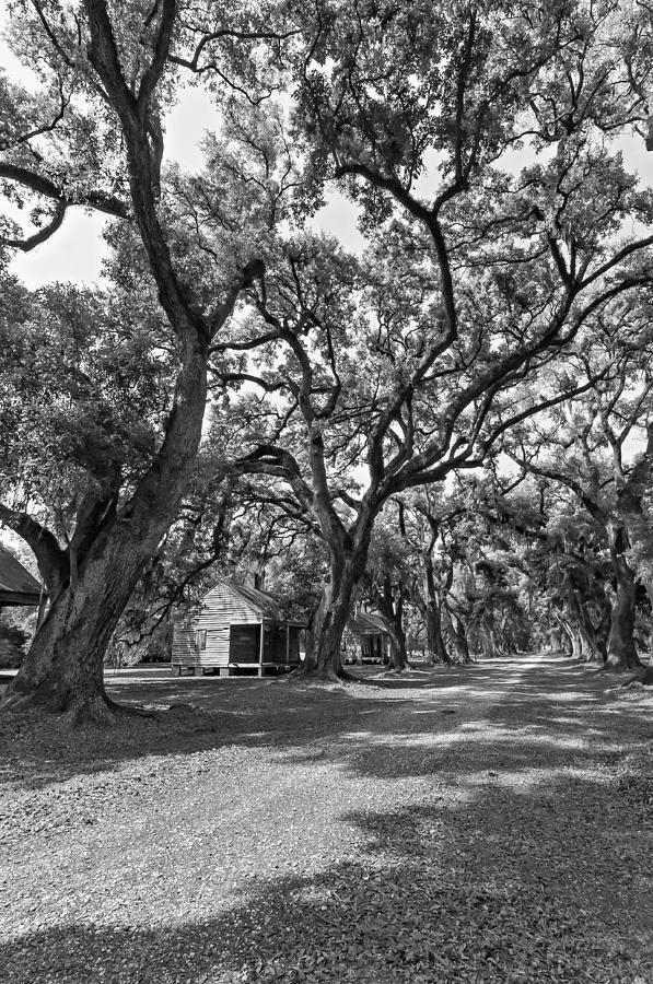 Evergreen Plantation Photograph - Southern Lane Monochrome by Steve Harrington