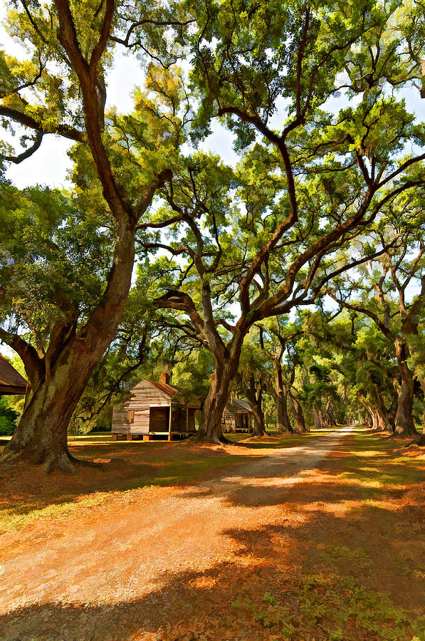 Evergreen Plantation Photograph - Southern Lane Paint Filter by Steve Harrington