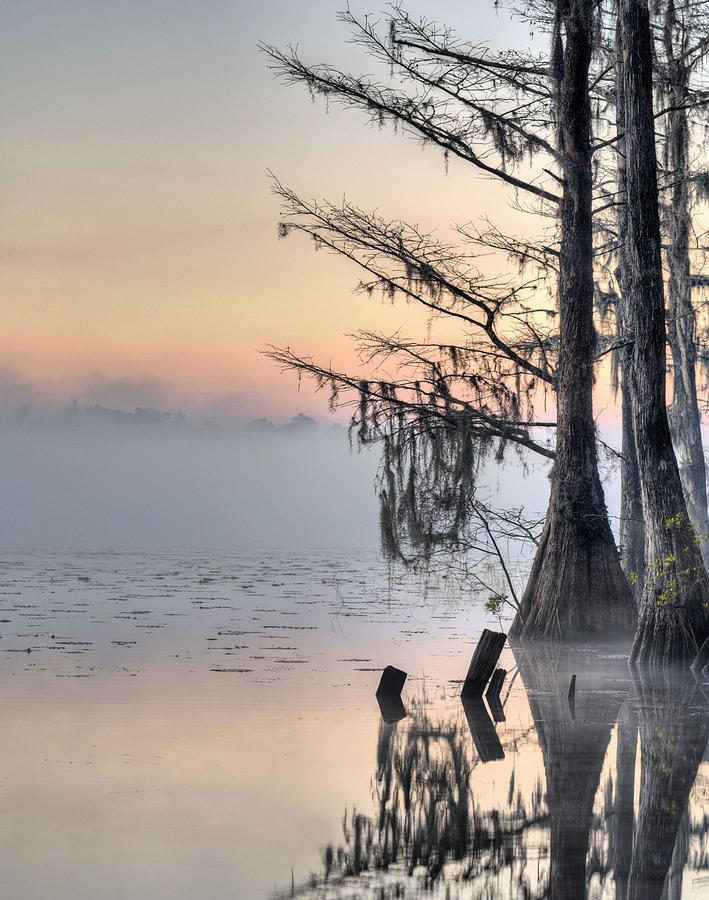 Cypress Tree Photograph - Southern Sunrise  by JC Findley