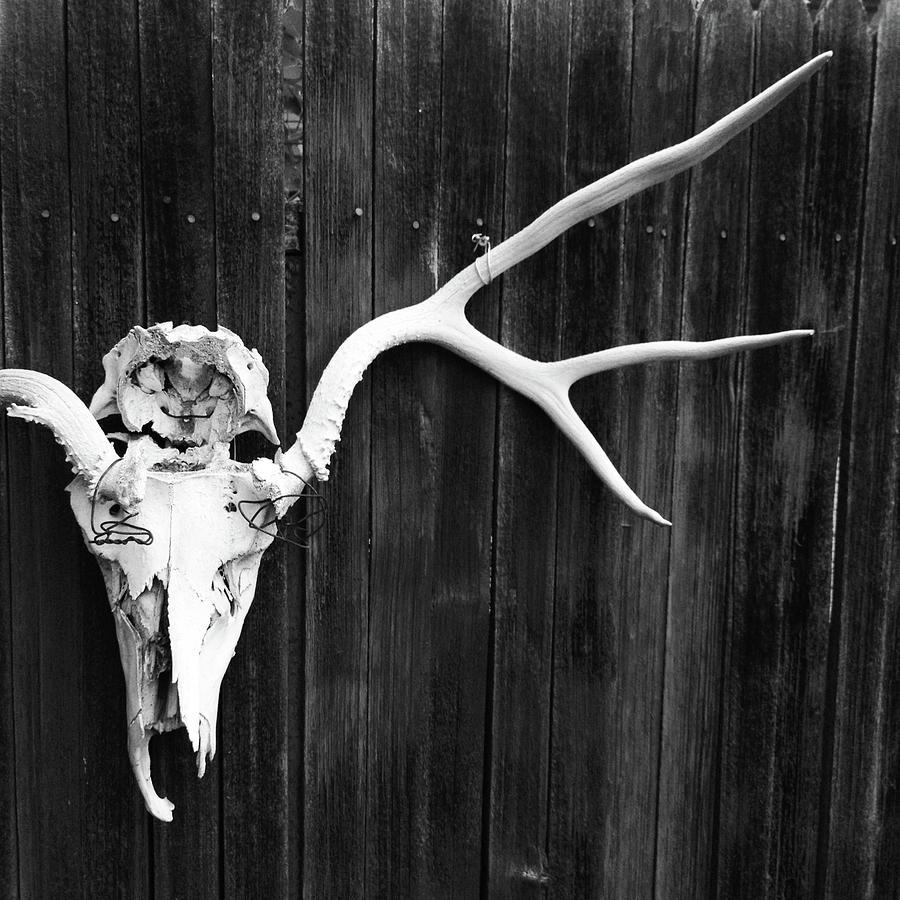 Southwest Americana Photograph by Amygdala imagery