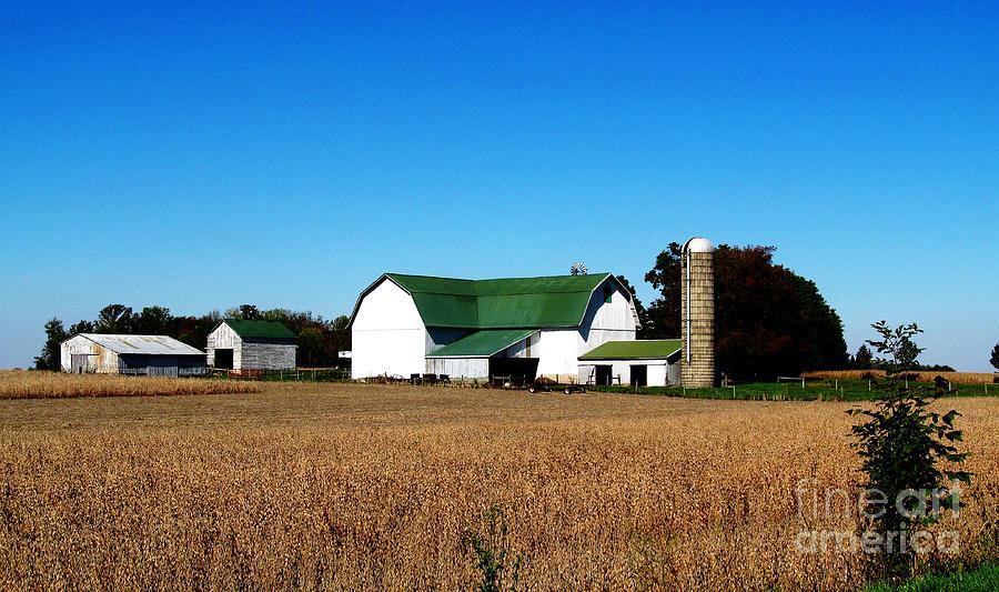 Farms Photograph - Soybean Farm by Tina M Wenger