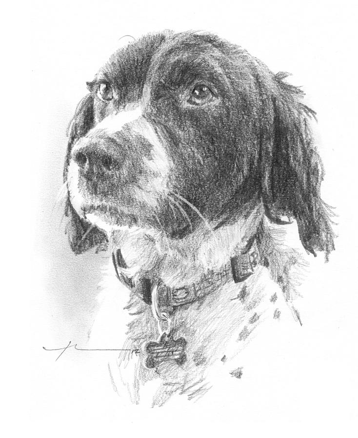 Spaniel Dog Pencil Portrait Drawing by Mike Theuer