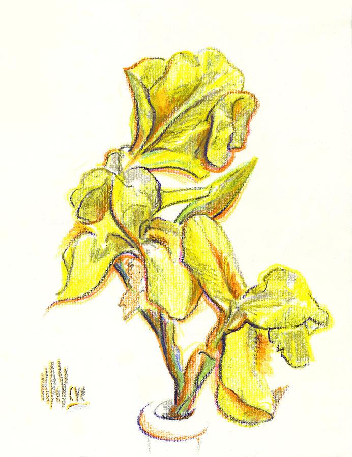 Spanish Iris Painting - Spanish Irises by Kip DeVore