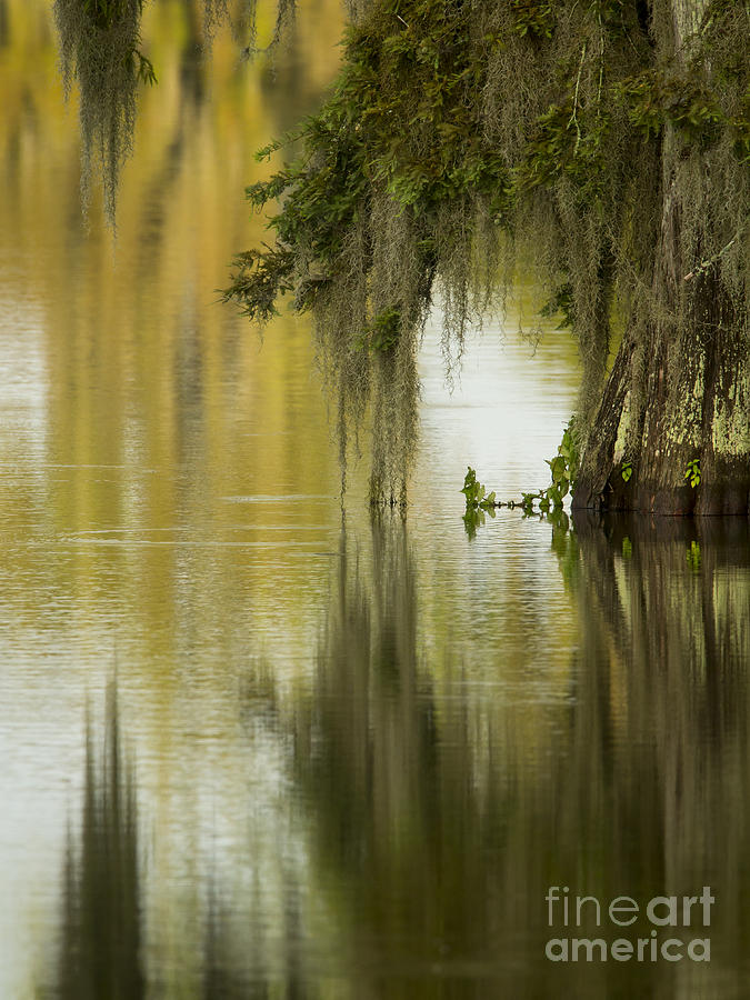 Vertical Photograph - Spanish Moss Reflections by Kelly Morvant
