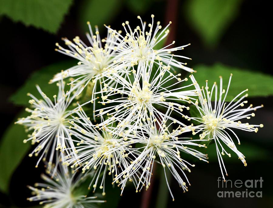 Sparkle Photograph - Sparkle by John Rizzuto