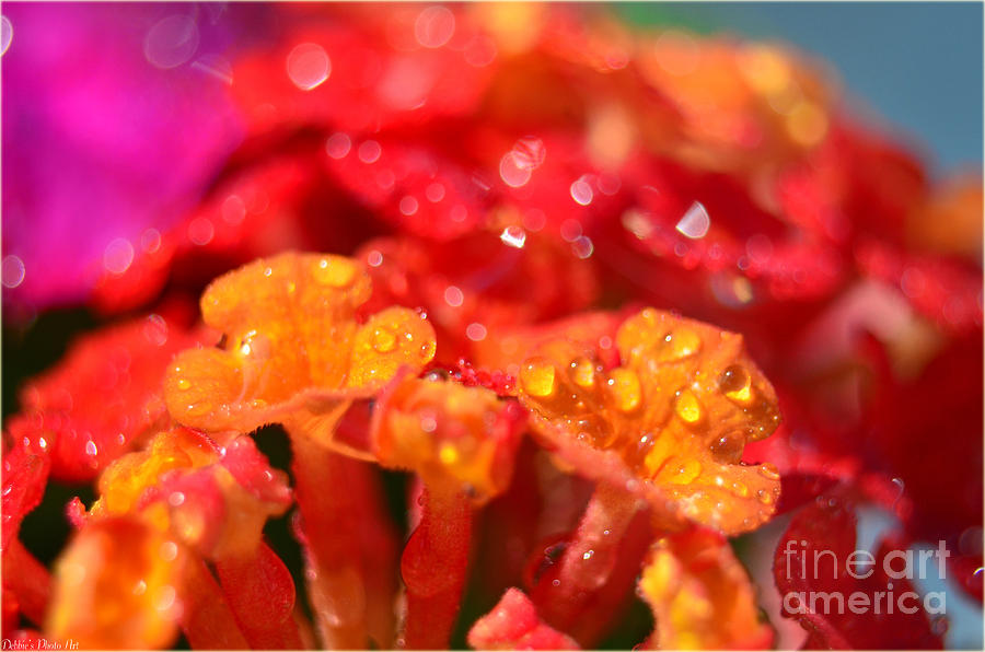 Nature Photograph - Sparkling Jeweltone Floral II by Debbie Portwood