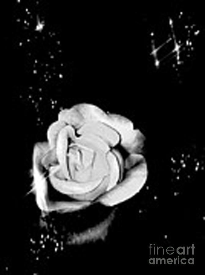Sparkling Rose Photograph - Sparkling Rose by Gayle Price Thomas