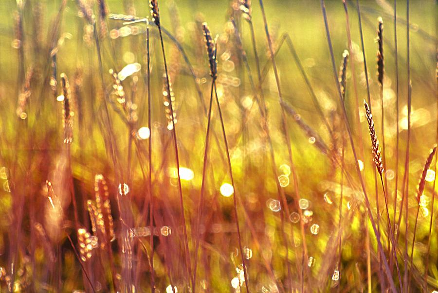 Grass Photograph - Sparkling Wet Grass In The Sunlight by Anne Macdonald