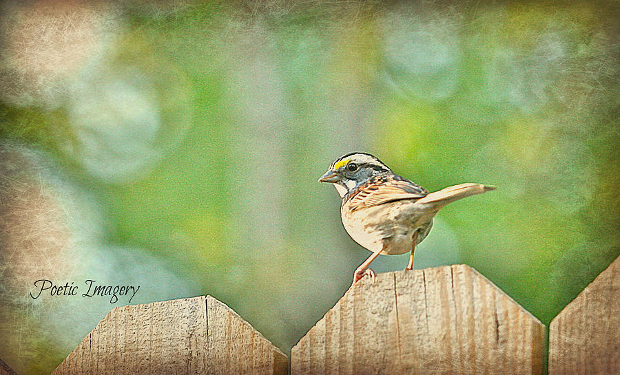 Bird Photograph - Sparrow by Debbie Sikes
