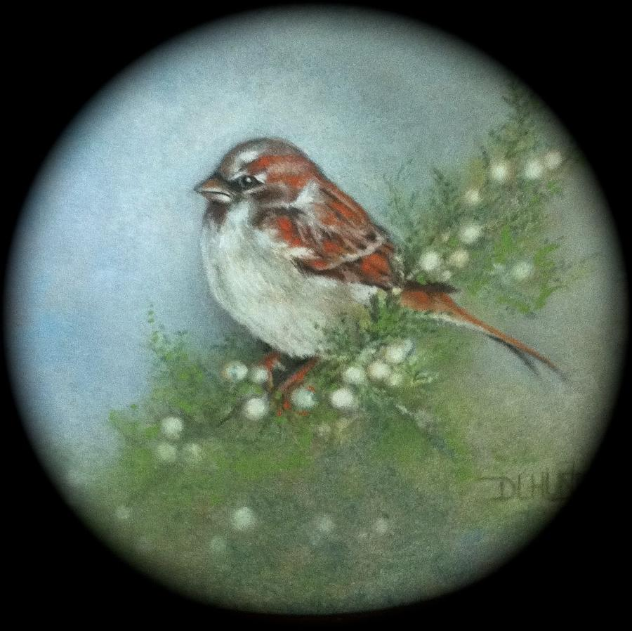 Sparrow Painting - Sparrow by Diana L Hund