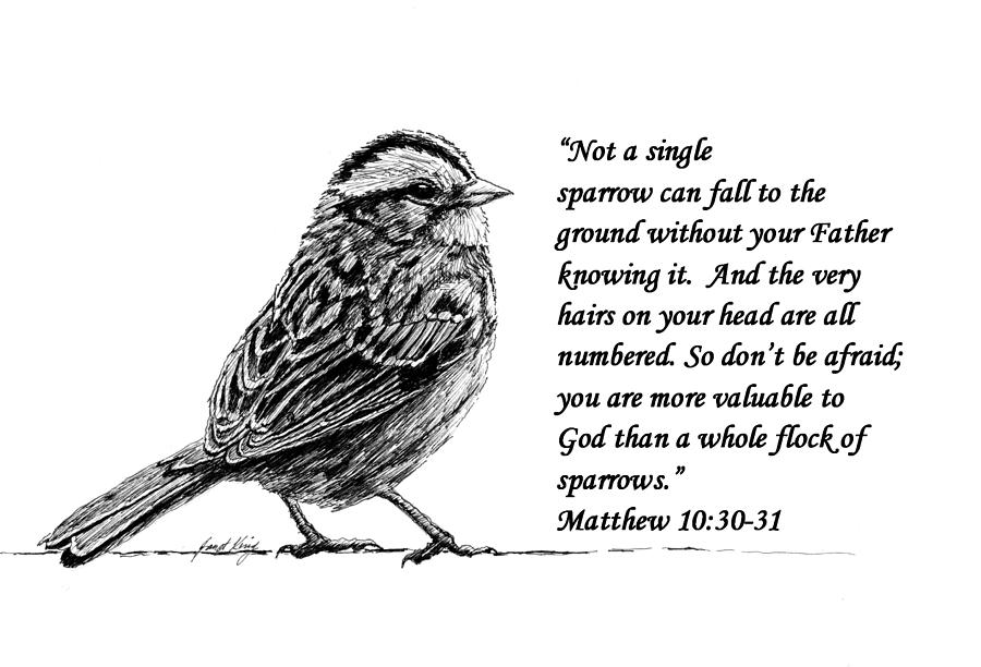 Sparrow Drawing With Scripture Drawing By Janet King