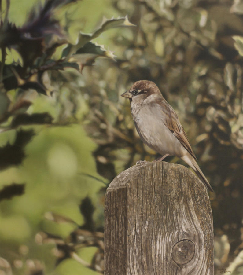 Sparrow Painting - Sparrow On Fence by Alberto Ponno