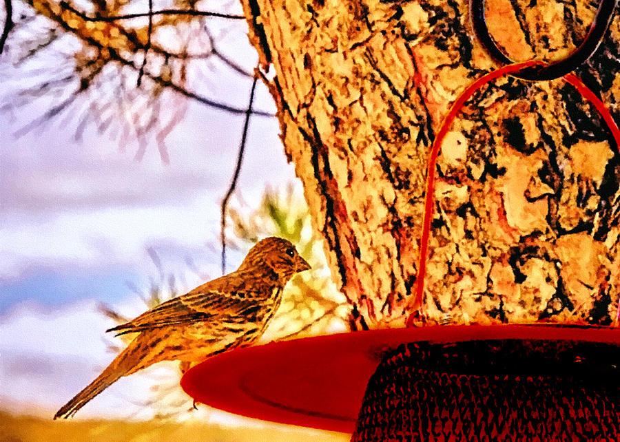 American Tree Sparrow Painting - Sparrow Pine Tree Feeder by Bob and Nadine Johnston
