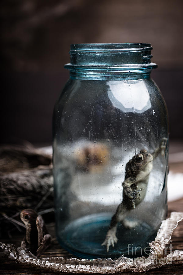 Frog Photograph - Specimens by Edward Fielding