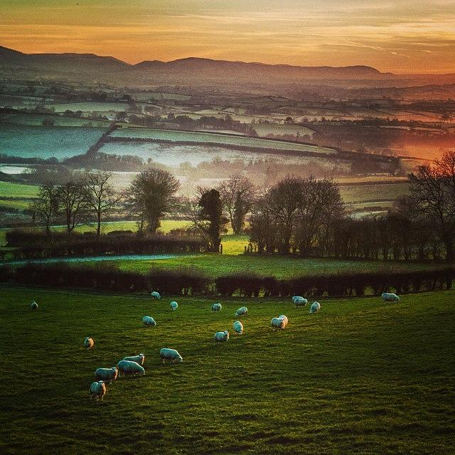 Speckled Sheep Photograph by Aleck Cartwright