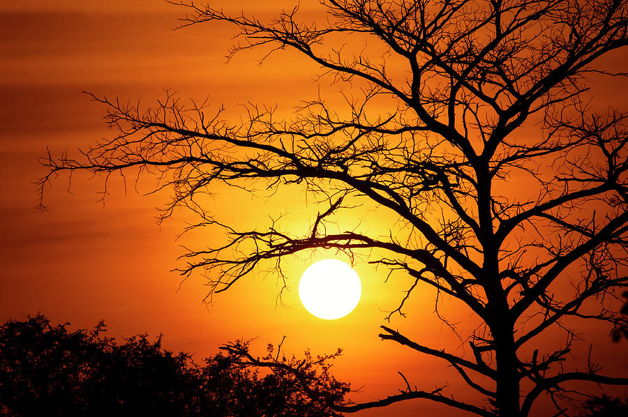 Spectacular Sunset Behind A Tree Photograph by Guenterguni