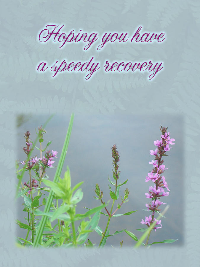 Speedy Recovery Greeting Card - Purple Loosestrife Wildflower