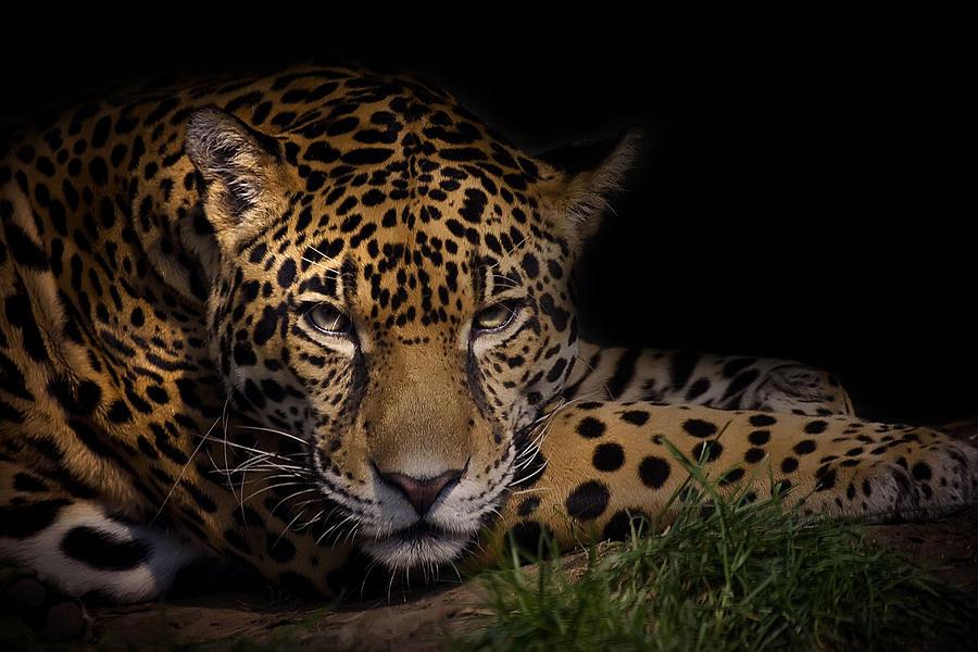 Animal Photograph - Spender by Cheri McEachin