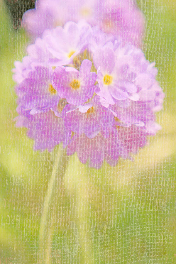 Flowers Photograph - Sphere Florale - 01tt01a by Variance Collections