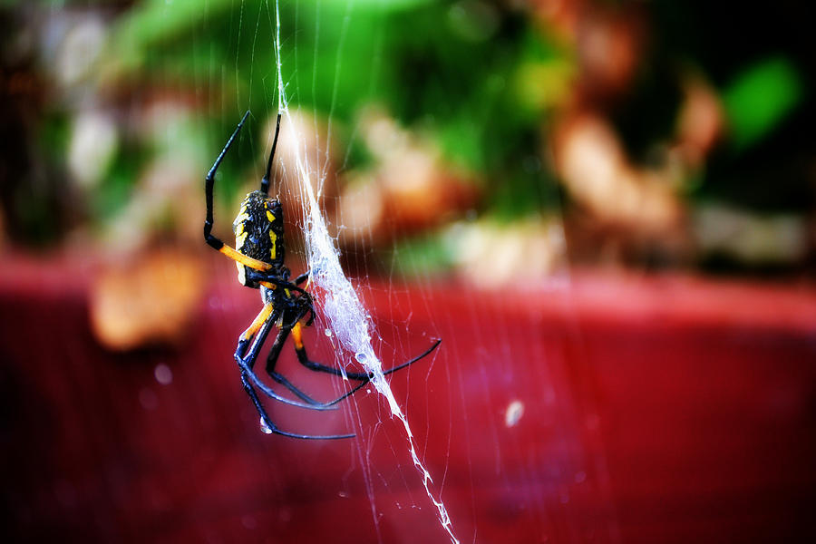 Spider Photograph - Spider And Web by Adam LeCroy