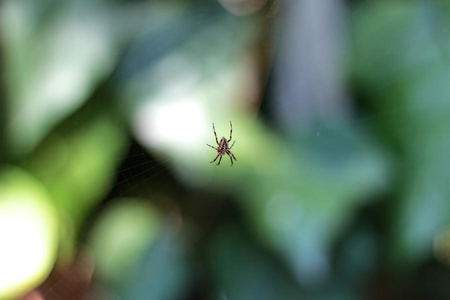 Spider Photograph - Spider Bokeh by Rick Starbuck